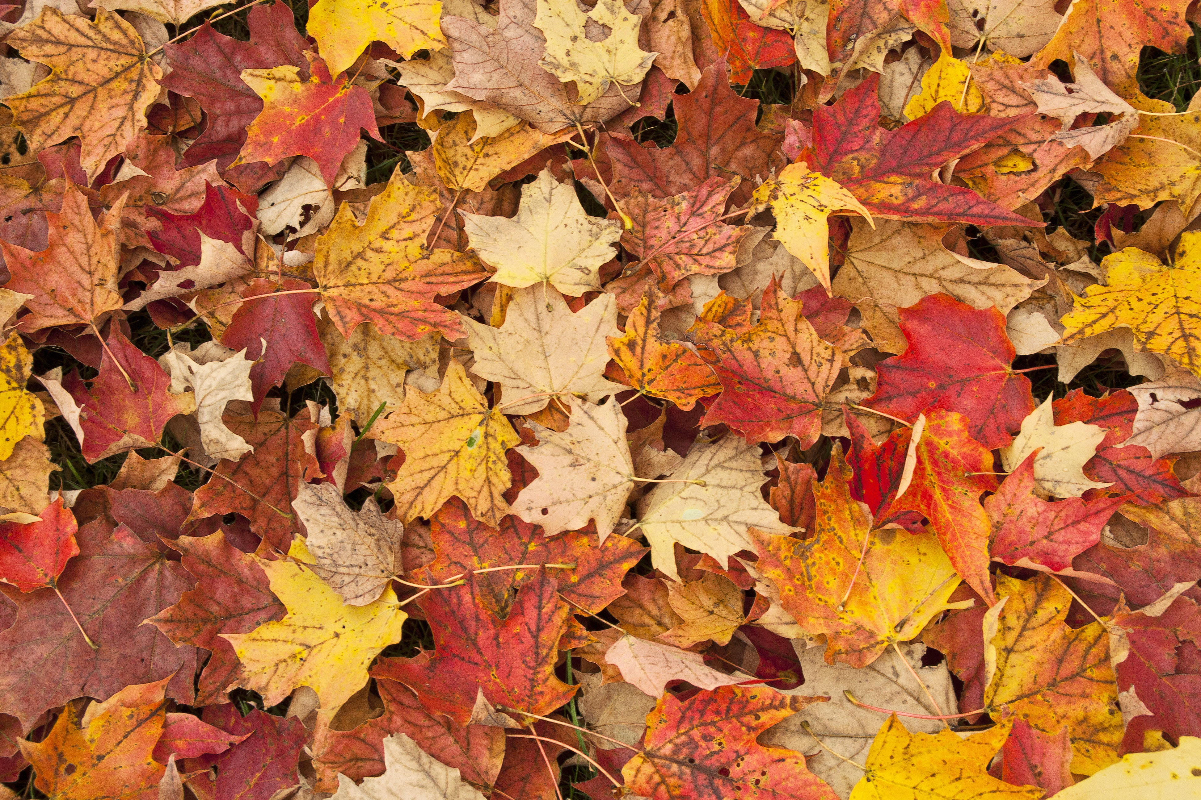 Why leaves fall: the causes of the phenomenon 63