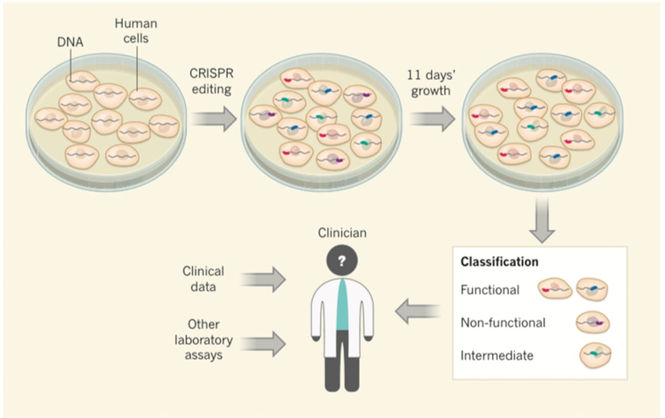 CRISPR BRCA1 breast cancer
