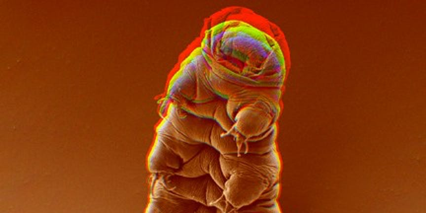 Tardigrade Survival After Moon Crash Raises Concerns About Colonization