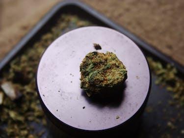 unknown strain weed pot jazz cabbage devil's lettuce marinol dronabinol