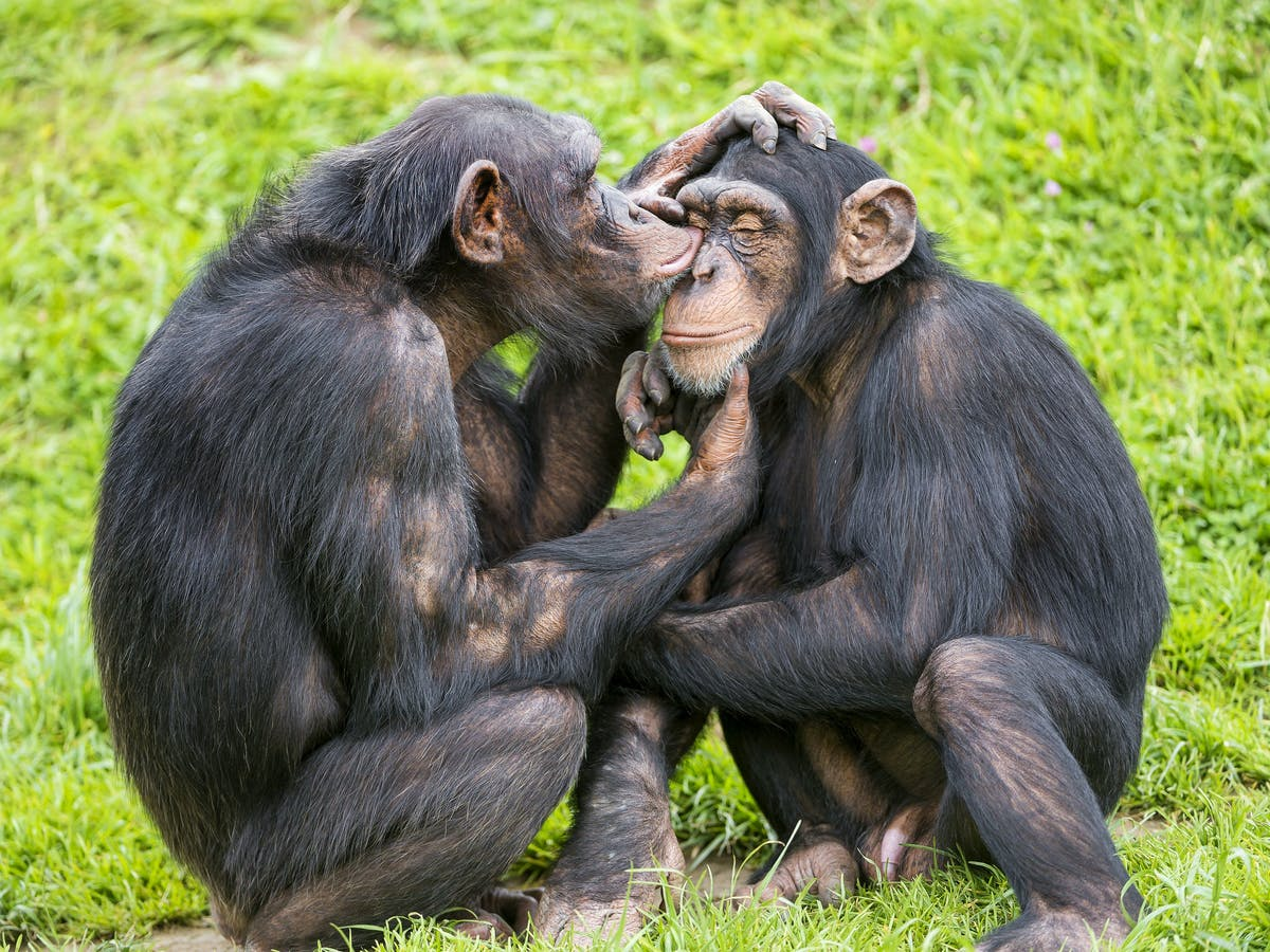 Origin of Human Language Doesn't Have Roots in Chimp