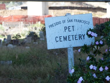 The Nine Lives of San Francisco's Presidio Pet Cemetery