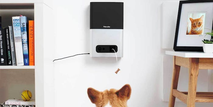 Petcube Bites camera and treat dispenser.