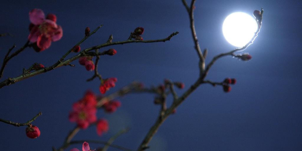 Image result for flower moon