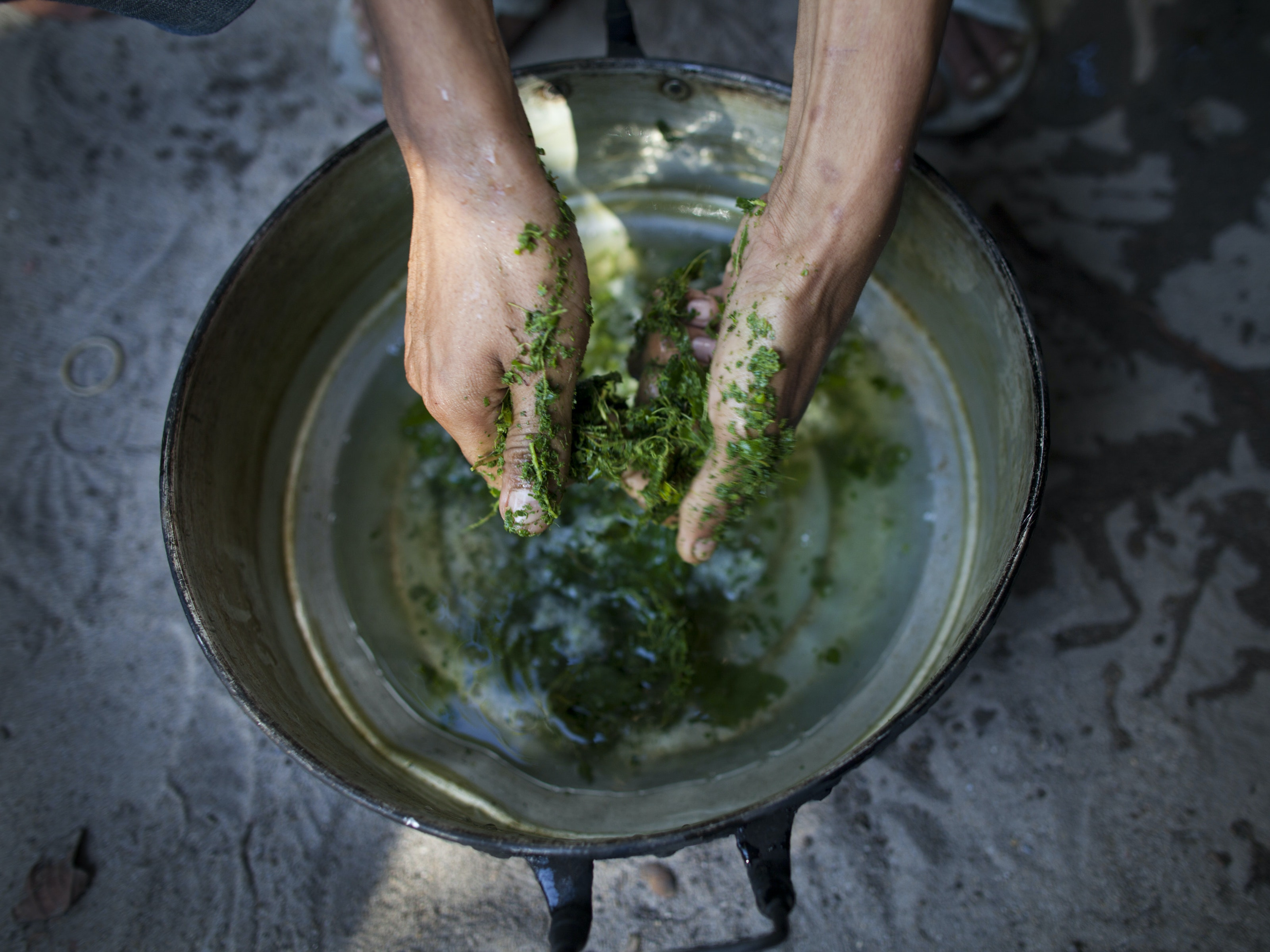 NARWATHIWAT,THAILAND - SEPTEMBER 1:  A Thai Malay Muslim drug user breaks up the kratom leaf into a pan to form part of a popular cheap narcotic drink called 4 x 100 on September 1, 2011in Narwathiwat, southern Thailand. Translated as ' sii khun roi,' 4 x 100  is a mix of the illegal kratom leaf, cough syrup and Coca-Cola with added ingredients like tranquilizers and marijuana. Many unemployed young ethnic Thai Malay Muslims are becoming more embedded in daily substance abuse and a culture of drugs as they turn to substances such as 4 x 100, marijuana and methamphetamines to cope with daily life. In southern Thailand for the last 6 years there has been almost  daily violence happening over a wide region which has claimed more than 4,000 lives. The on-going, low grade insurgency and violence is between Muslim separatists, and the Thai security forces in a country that is over 95% buddhist.  (Photo by Paula Bronstein/Getty Images)