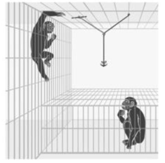 bonobo selflessness experiment