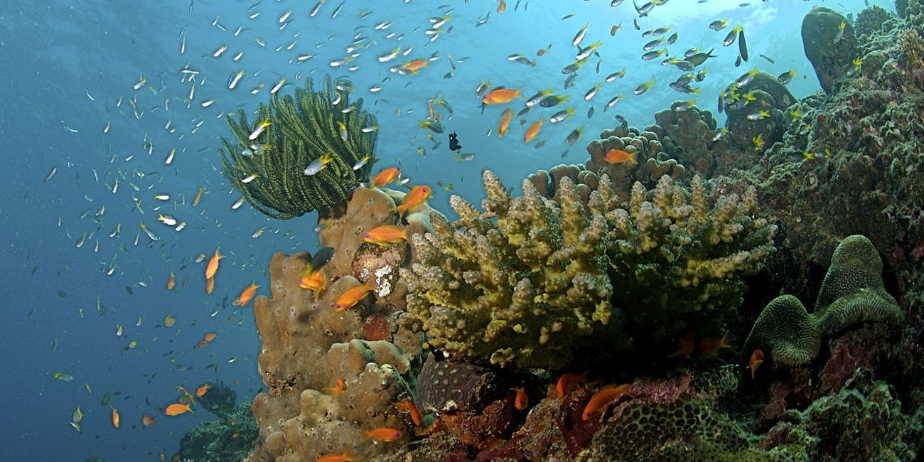 Coral Reef at the Andaman Islands