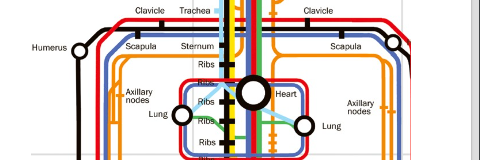 A Smart subway-styled diagram shows the human body as a smart city | inverse