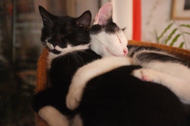 Cuddle Cats