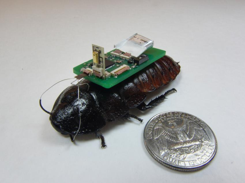 """""""Biobot"""" Cyborg Cockroaches Could Be The Future Of Disaster Relief"""