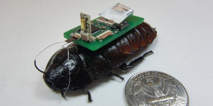 """Biobot"" Cyborg Cockroaches Could Be The Future Of Disaster Relief"