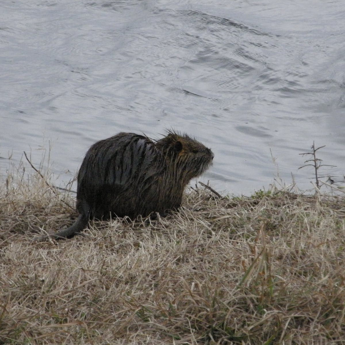 People have bizarre ways of dealing with nutria