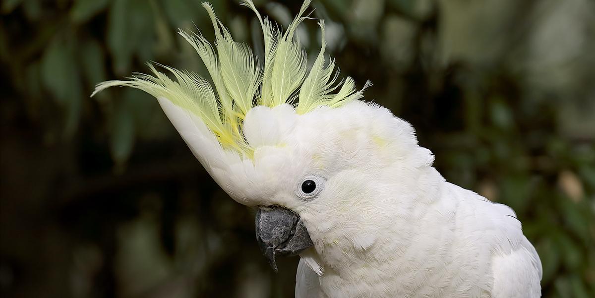 Bird Species That Barks Like A Dog