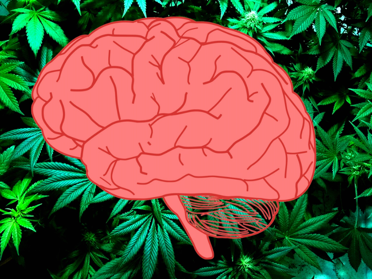 Pharmaceutical companies are developing marijuana treatments for brain cancer.