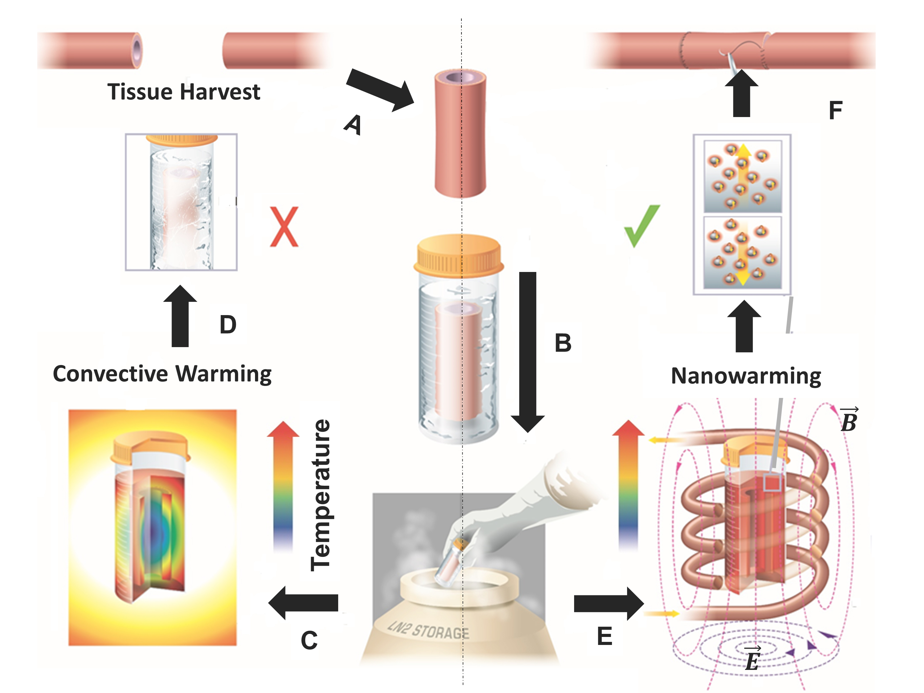 Unlike its predecessors, this new technique is capable of heating the cryogenic tissue evenly.