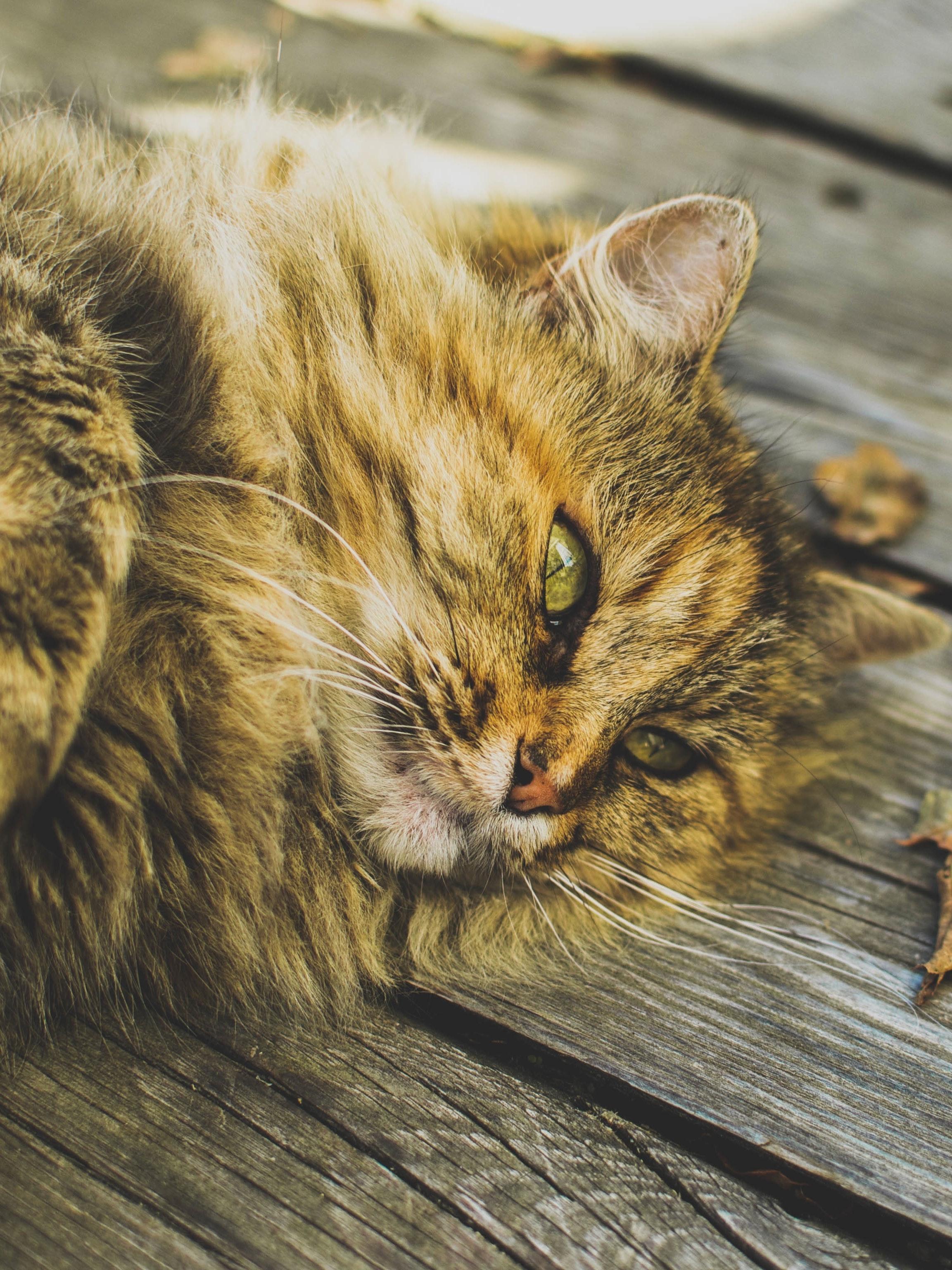 stray cat help