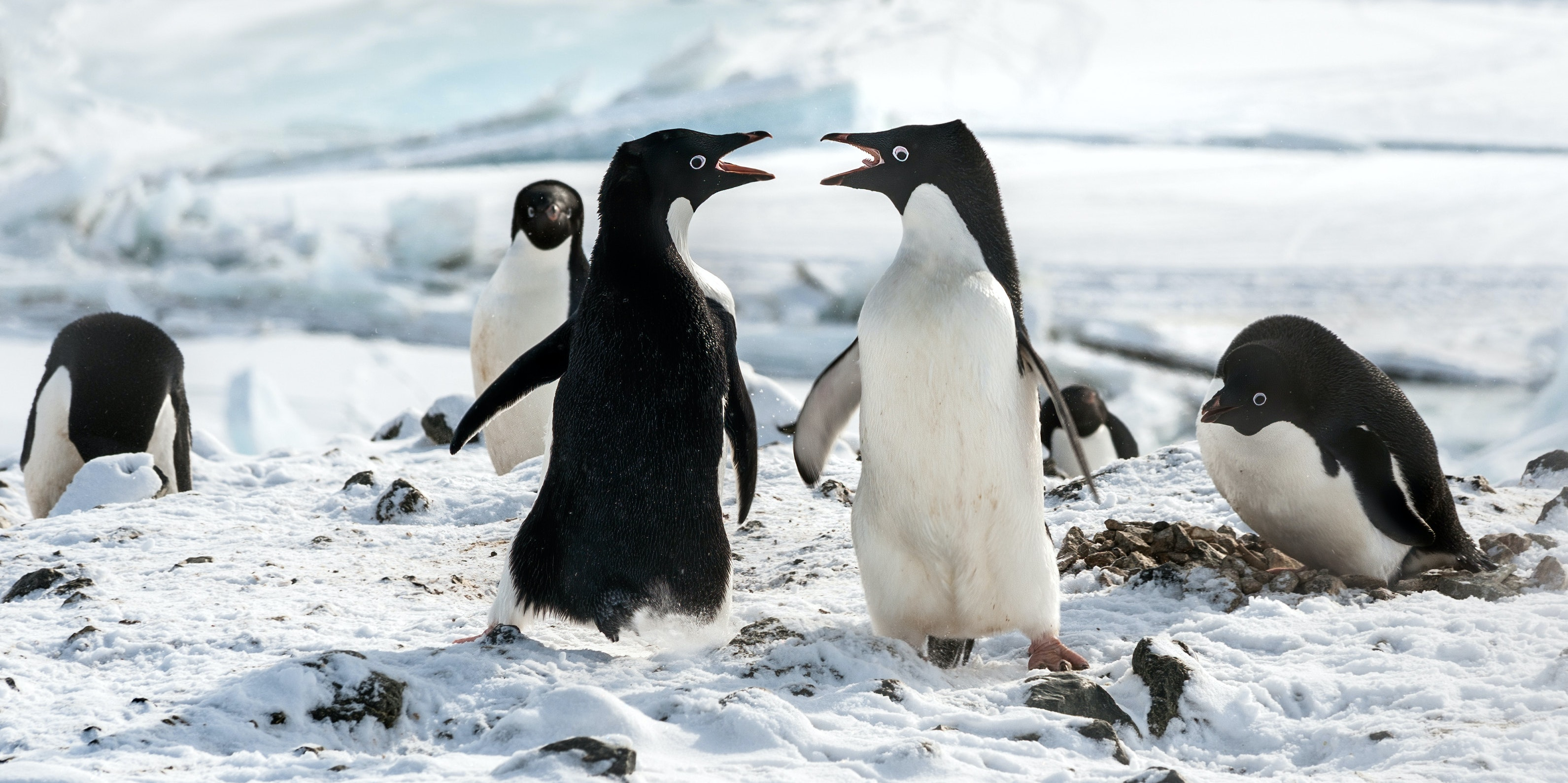 'DisneyNature Penguins' Review: A Live-Action Disney Movie We Actually Want