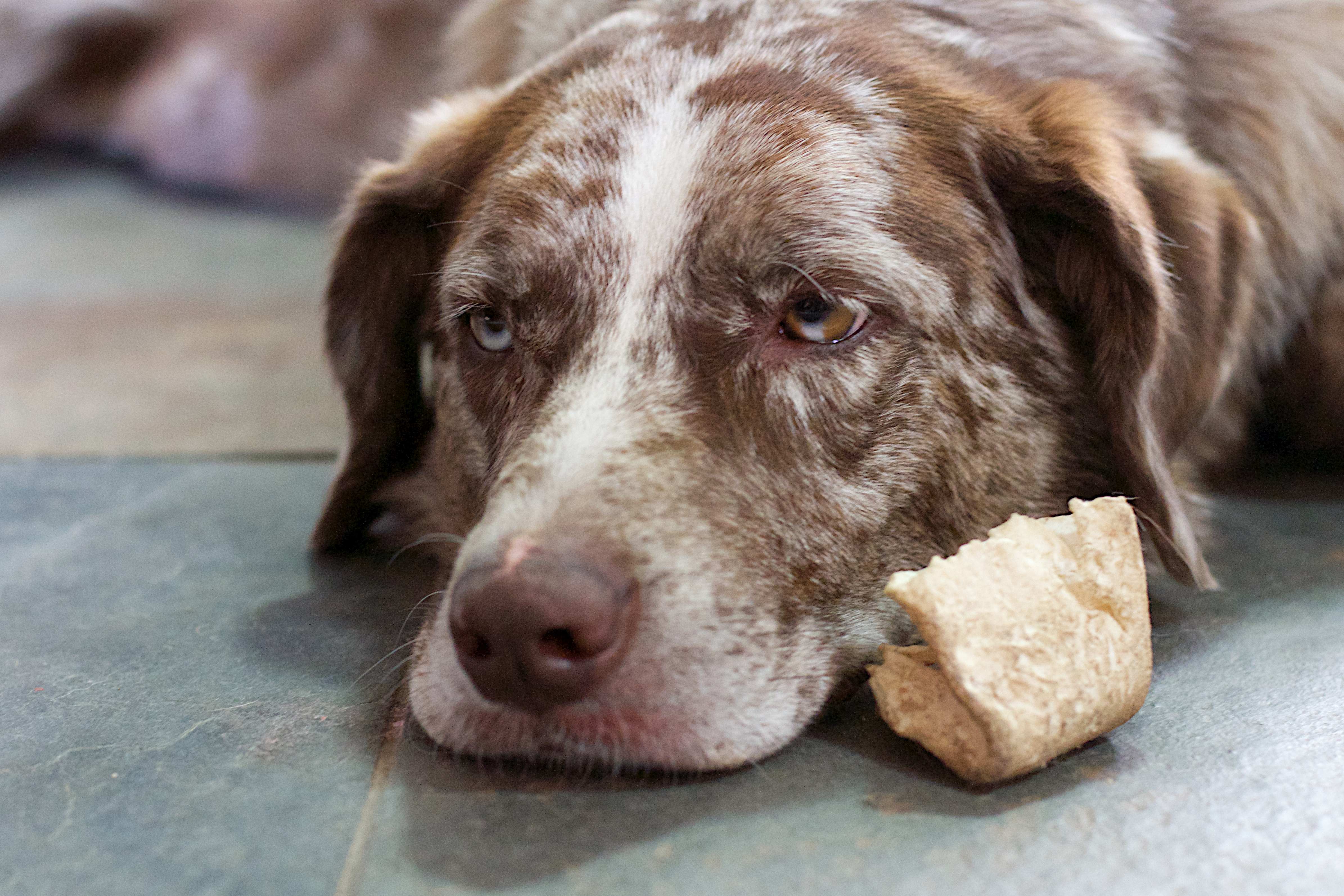 74e41cf50d Can Dogs Eat Thanksgiving Turkey Bones  What to Do With Your Scraps ...