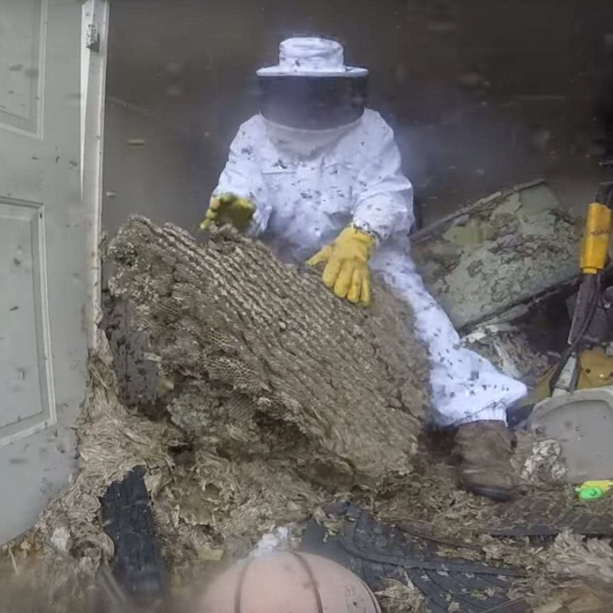 Watch This Man Dismantle A Wasp Nest That S Taken Over An Entire