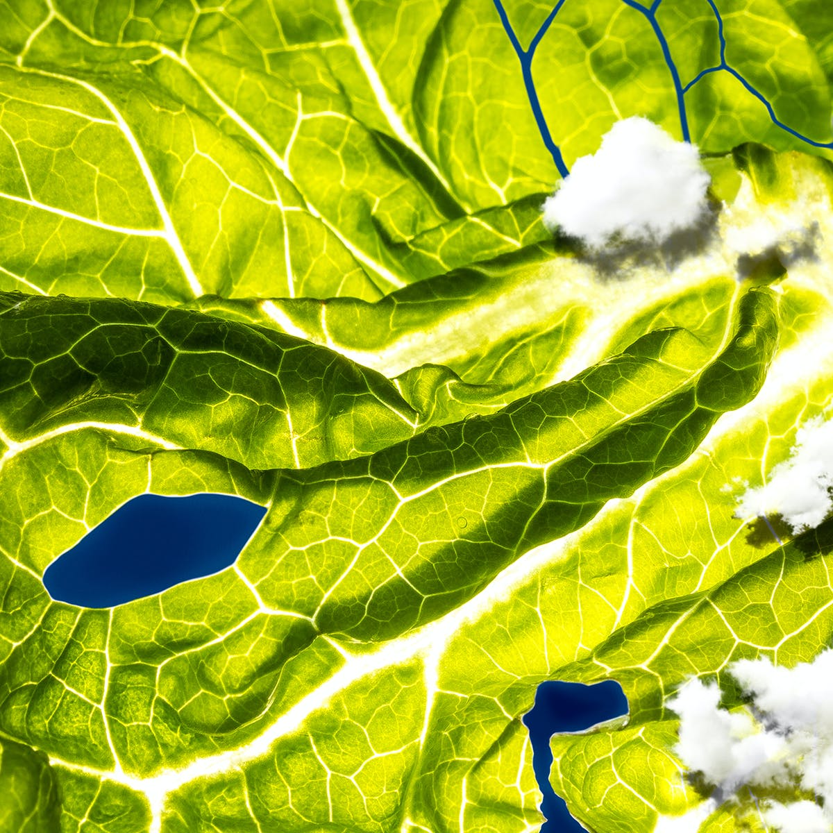 E. Coli Romaine Lettuce Outbreak Continues to Mystify Scientists