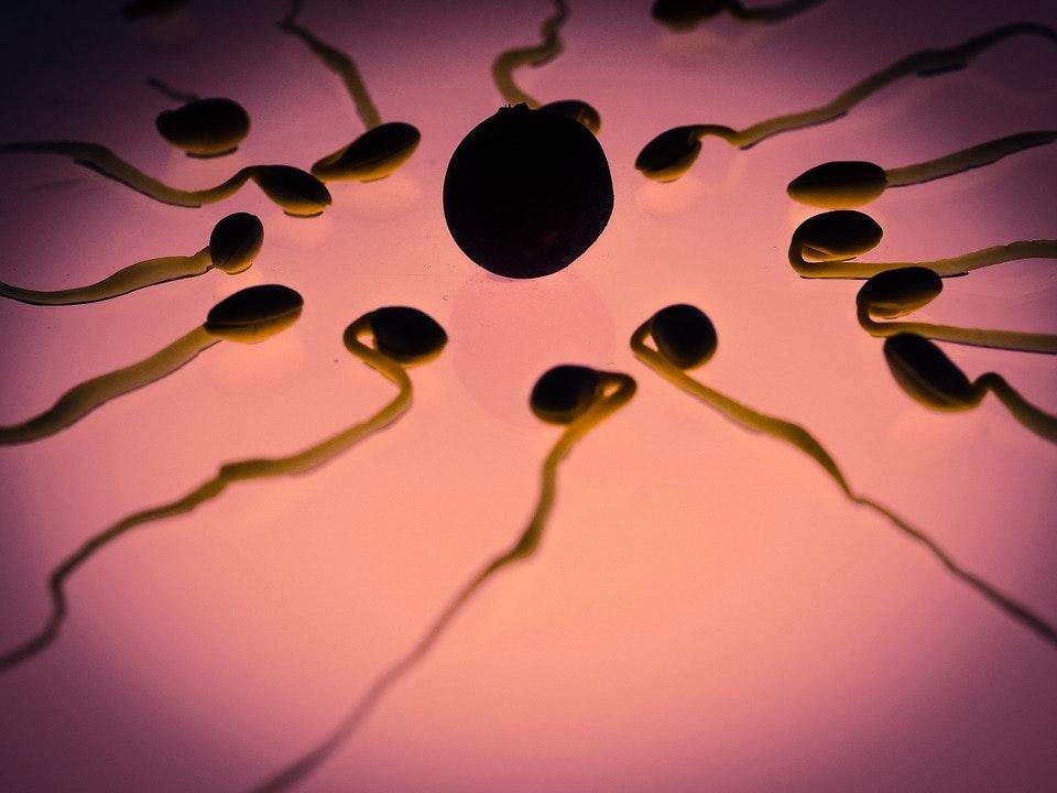 Very Low Swiss Sperm Quality Underscores a Troubling Worldwide Trend