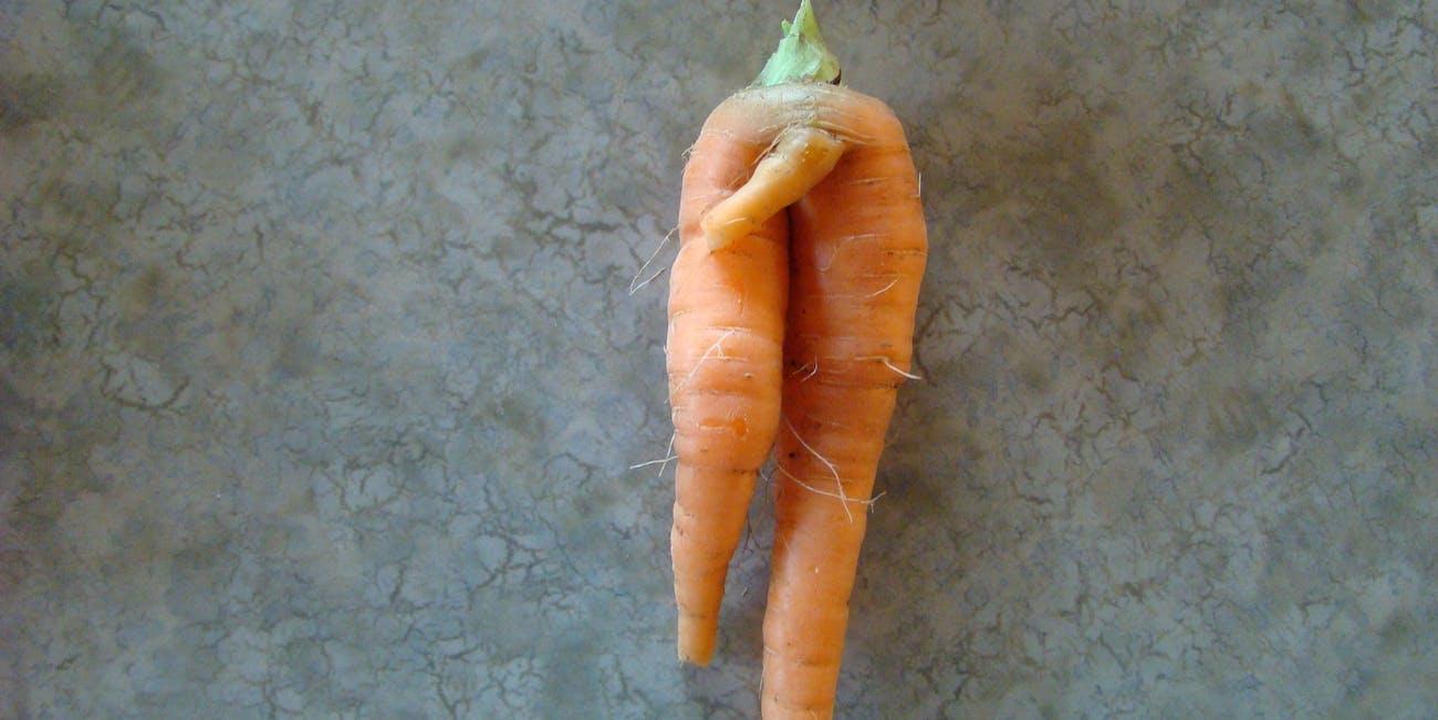 hung carrot