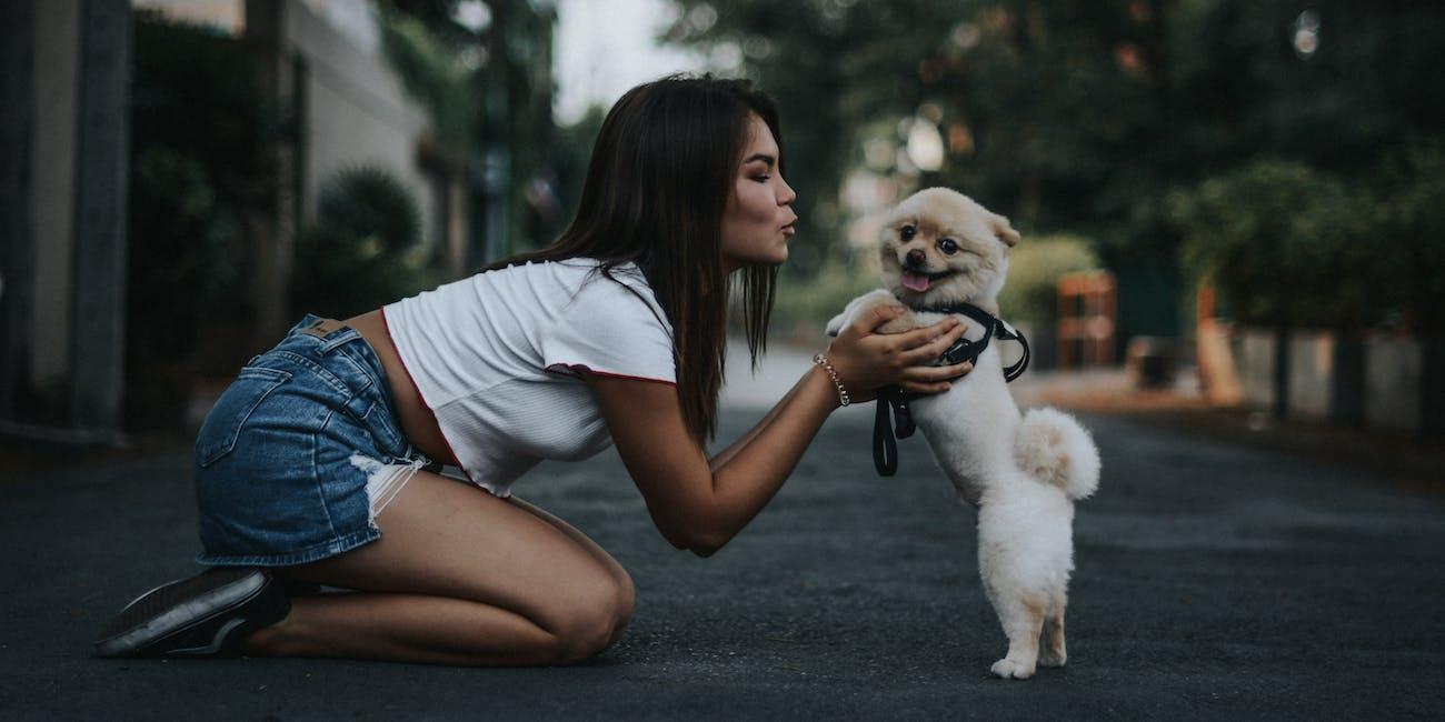 dog, pet