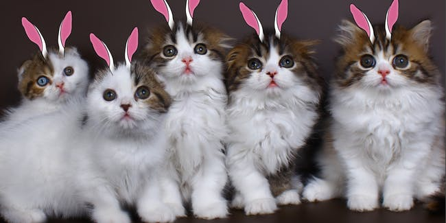Kittens mimic bunnies via social learning.