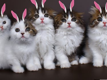 How Kittens Raised Near Rabbits Learned to Hop
