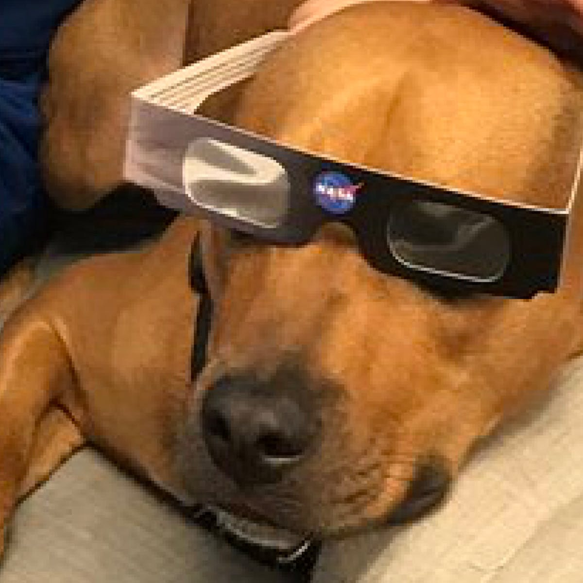 Dogs Inside For Eclipse
