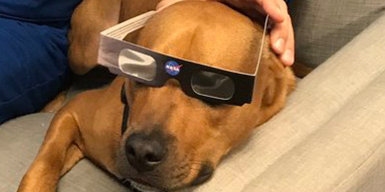 fe25258f839 Do Dogs Need Solar Eclipse Glasses  How to Keep Your Critters Safe on Monday