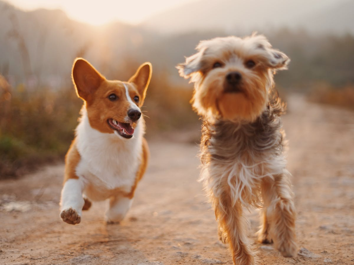 The Dog Effect: How Owning a Pet Improves Your Heart Health