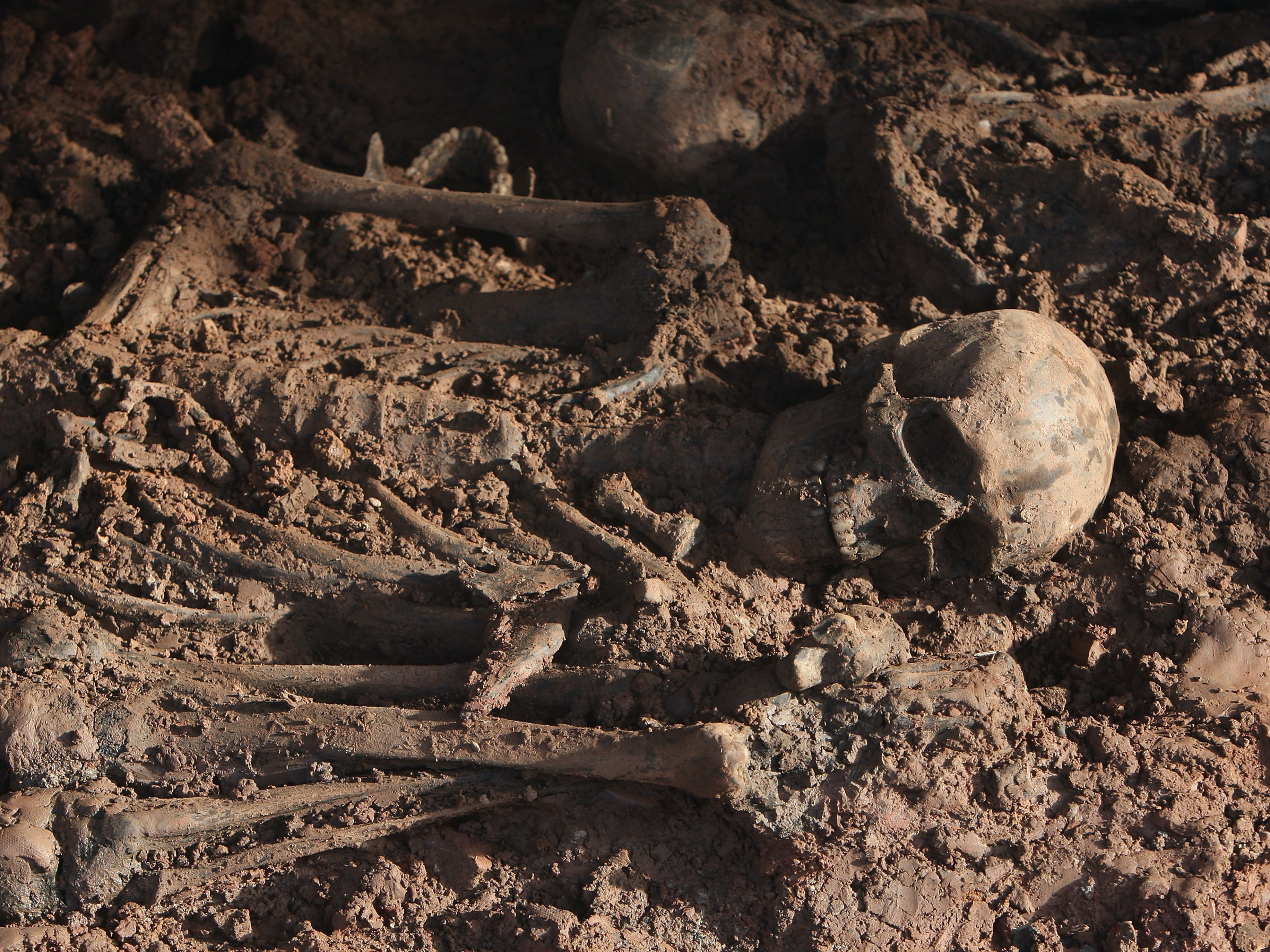 KASSEL, GERMANY - JANUARY 25:  A skeleton lies in a mass grave containing the remains of approximately 60 bodies discovered earlier in the week at a construction site on January 25, 2008 in Kassel, Germany. A factory producing tanks for the Nazis occupied the site during World War II, though forensic examiners say initial investigations lay doubt to the claim that the bodies are of slave labourers who worked at the factory. One examiner said that initial observations of the dental characteristics of the skeletons indicate the bodies date older than from World War II. He also said the cause of death was likely from disease, possibly tuberculosis.  (Photo by Sean Gallup/Getty Images)