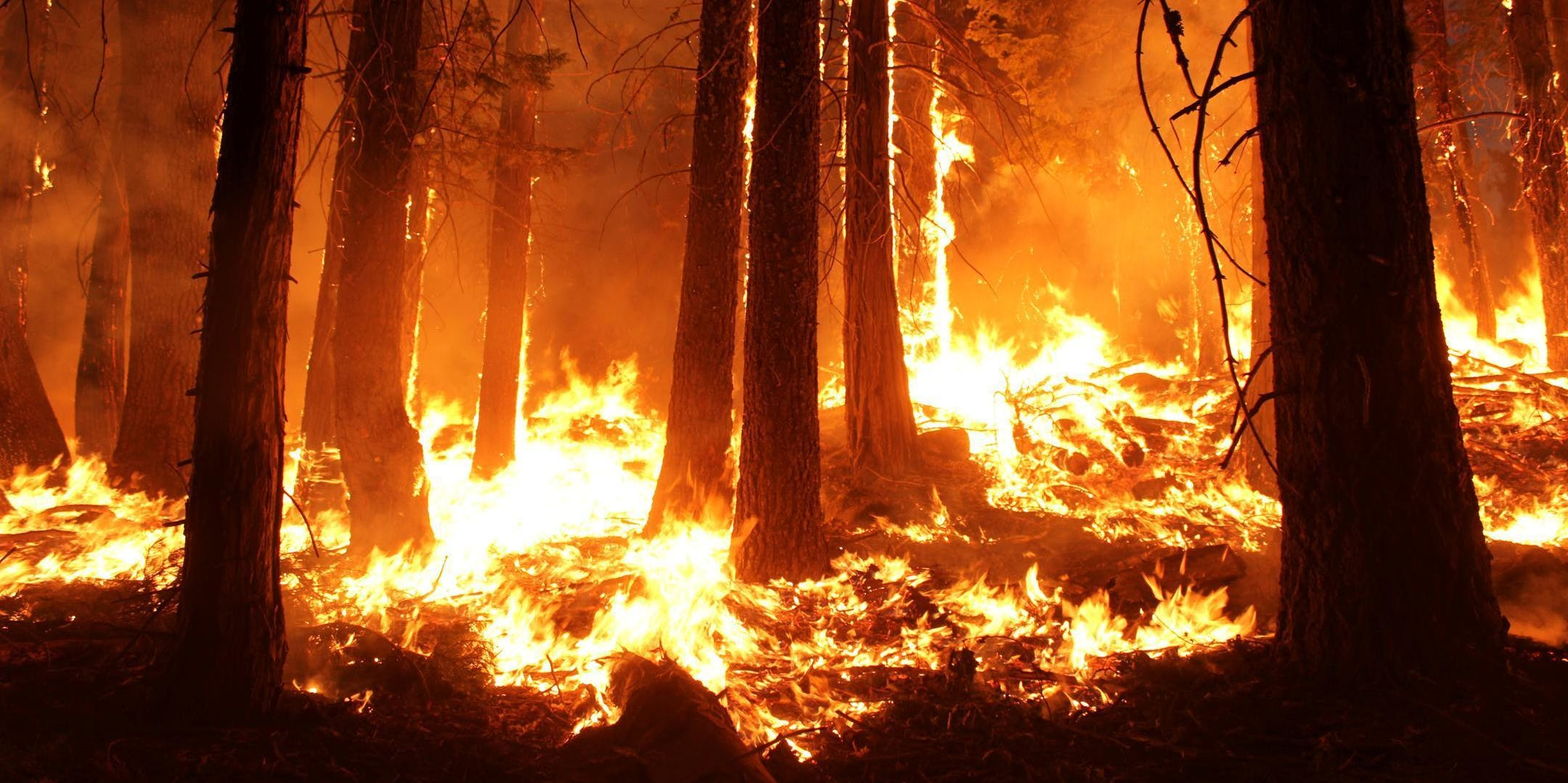 Forest fires have become more frequent and more intense as a result of climate change.