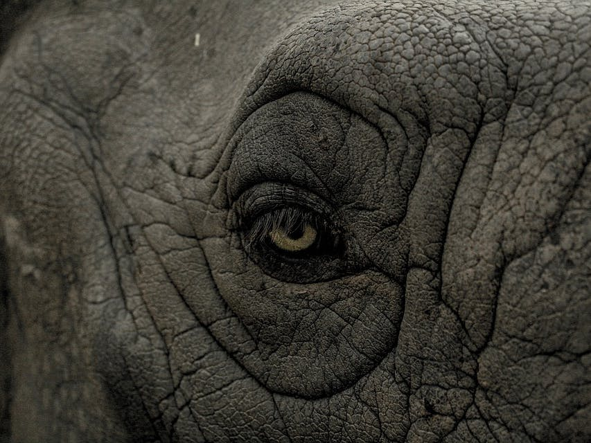 Biologists Finally Solve Mystery of Why Elephants Have Wrinkled Skin