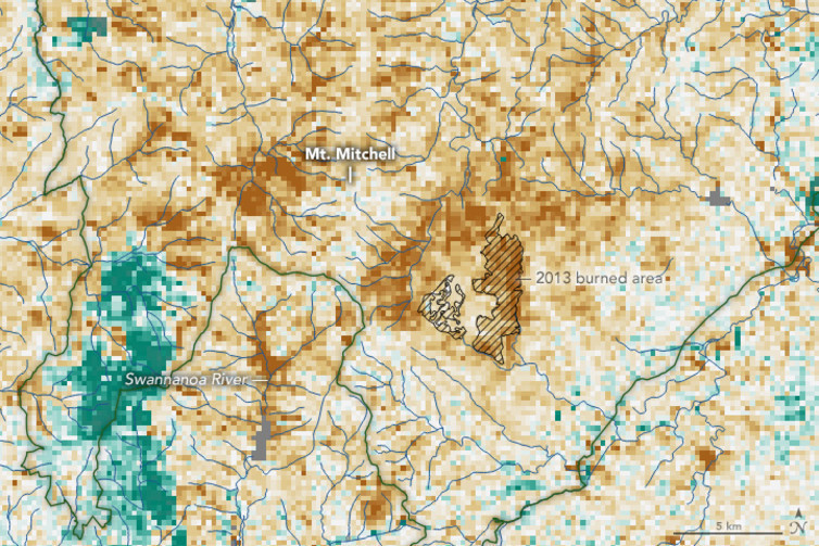NASA satellite data show the spread of hemlock decline, caused by an invasive insect called the hemlock woolly adelgid, near North Carolina's Mount Mitchell in February 2016. Brown areas have less vegetation than normal for the time of year.