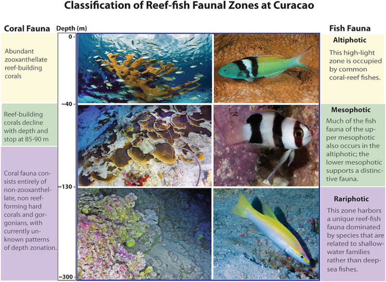 coral systems, fish