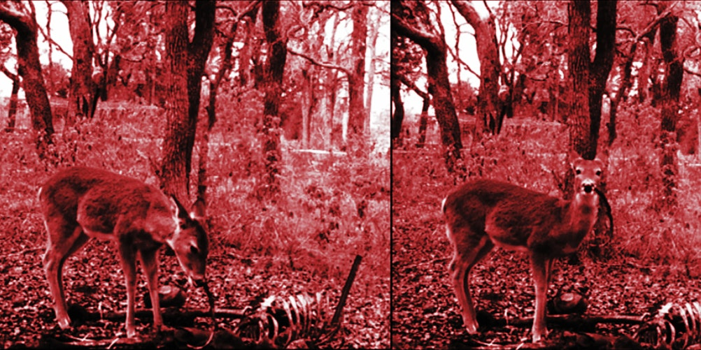 Give This Deer Gnawing on a Human Corpse a Break