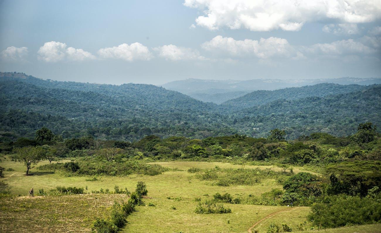 coffee plants climate change