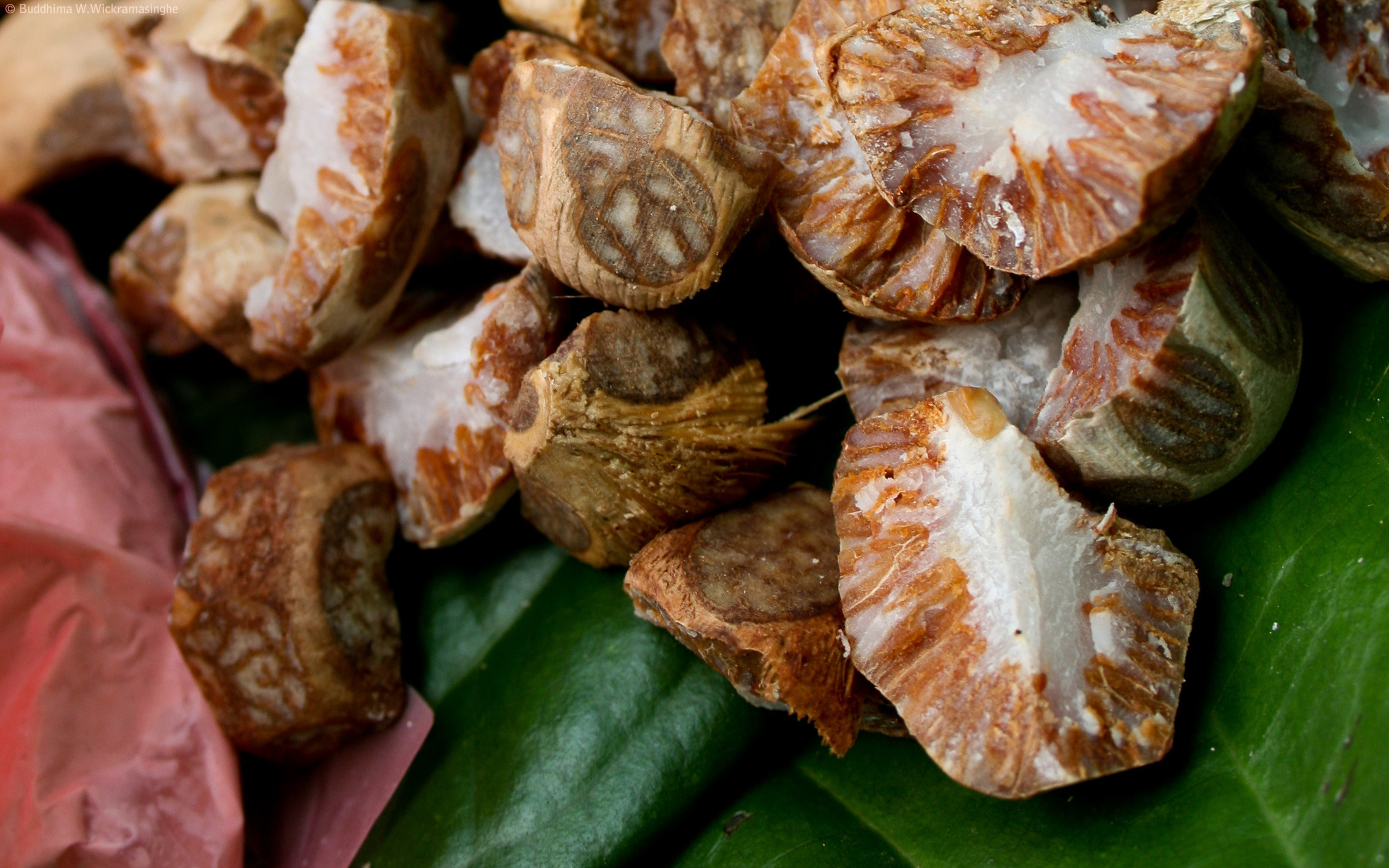 The Addictive Areca Nut Could Hold Key to Quitting Smoking