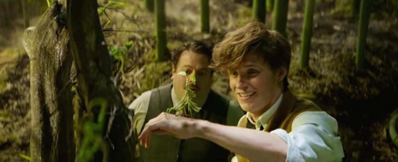 Newt Scamander, Jacob and a Bowtruckle in 'Fantastic Beasts and Where to Find Them'