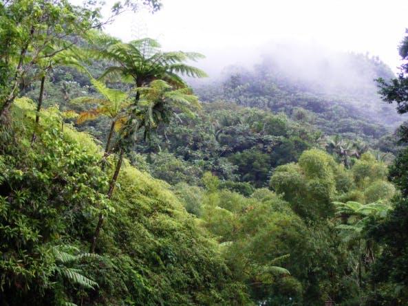 island rainforest