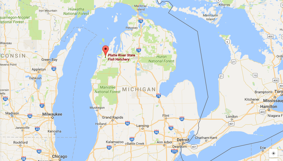 Ninety percent of Michigan's black bear population lives in the northern part of the state, where Platte River State Fish Hatchery is located.