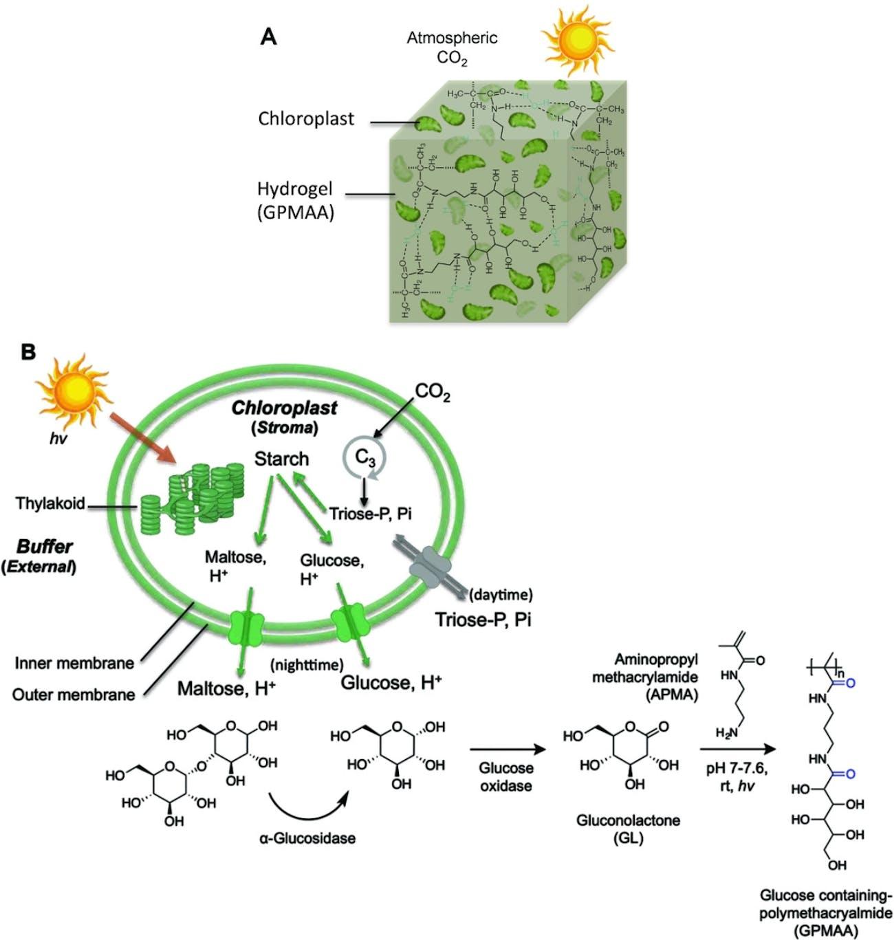 Diagram of molecular process and hydrogel