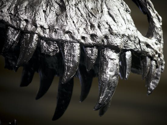 The Dinosaur Fossil Bubble Has Popped and Natural History Museums Are Pumped