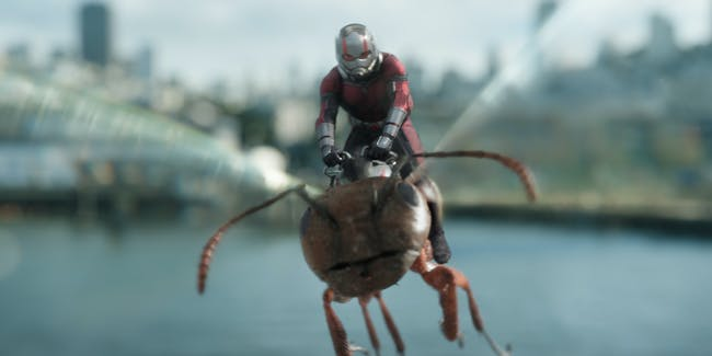 Ant-Man and the Wasp Infinity War