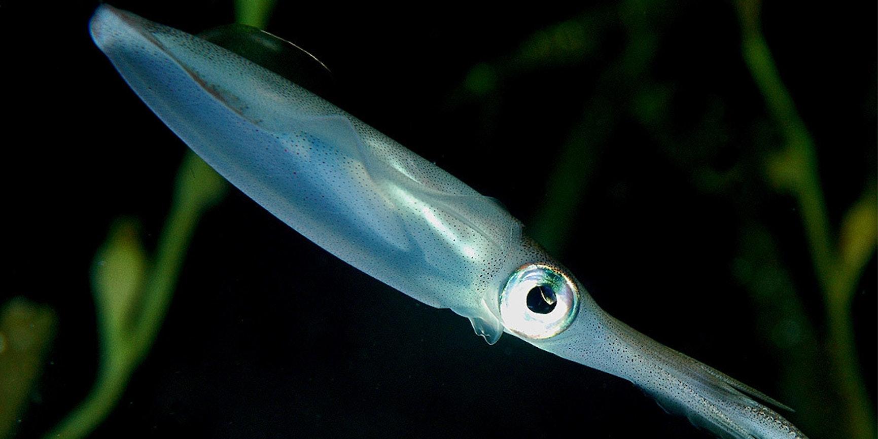 Penn State University scientists used squid ring teeth to make self-repairing fabrics