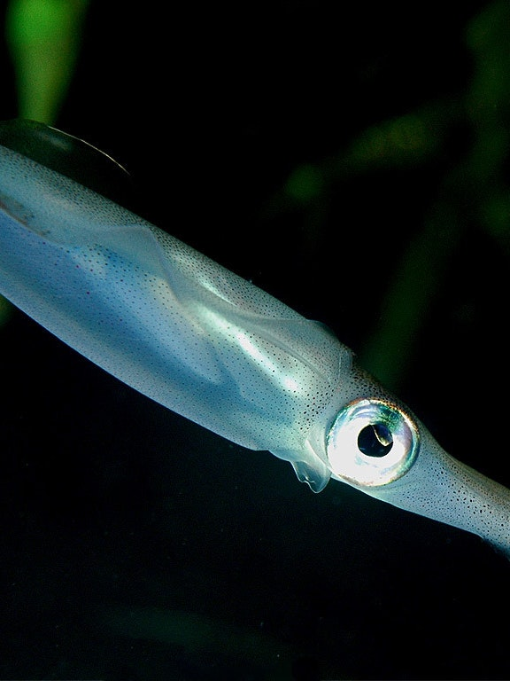 Penn State University scientists used squid ring teeth to make self-repairing fabrics