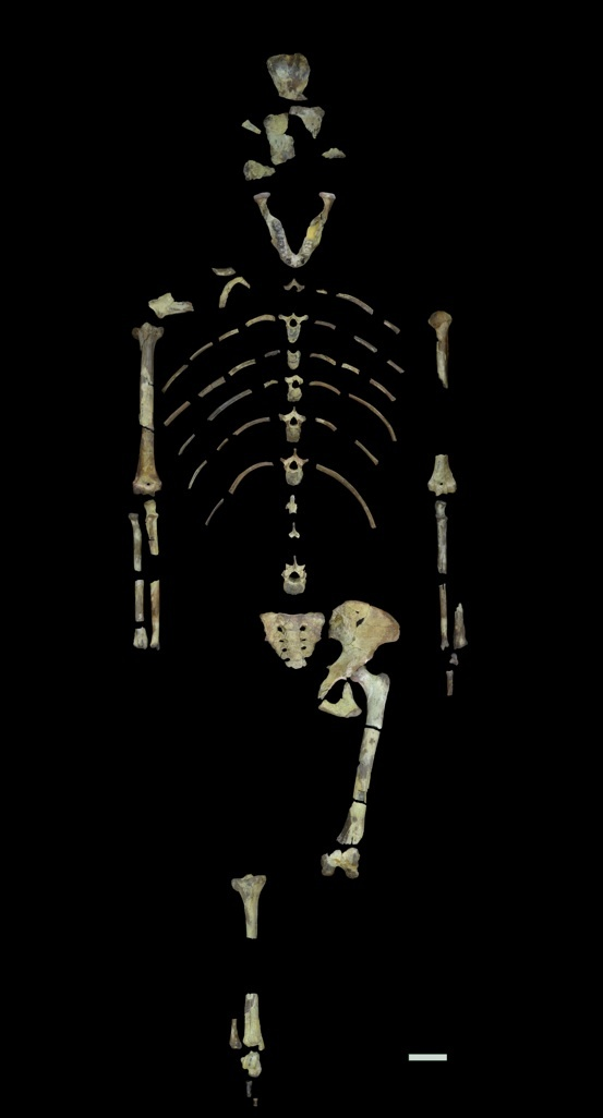 Lucy's skeleton is amazingly complete for a hominin fossil of her age.