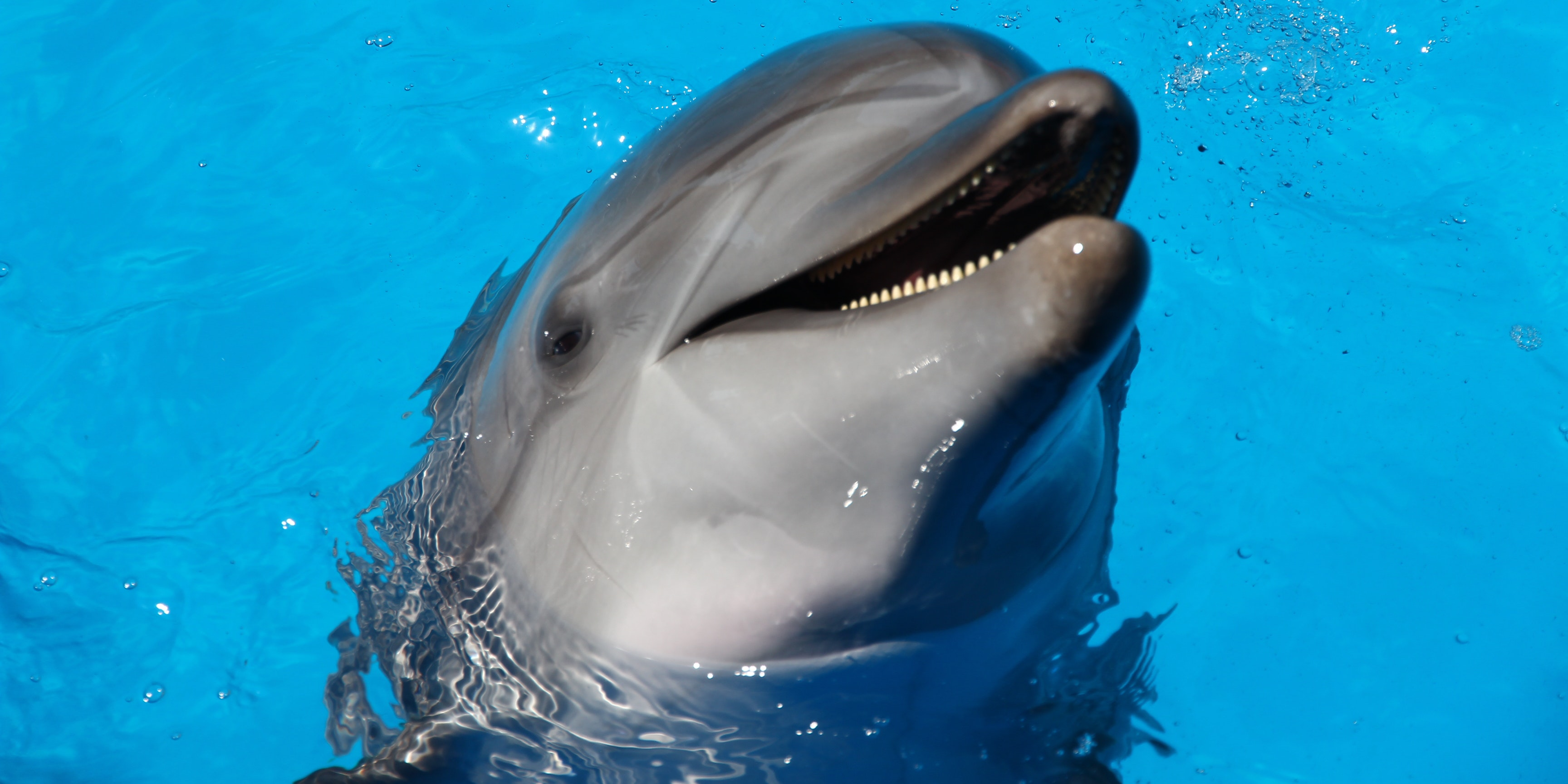 Scientists Discover Dolphins Call Each Other by Name